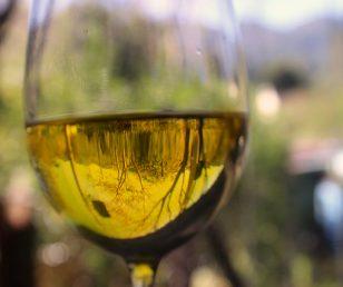 La muffa che nobilita il vino